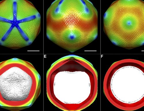 Cryogenic Electron Microscopy: A Leap Forward for UC Davis