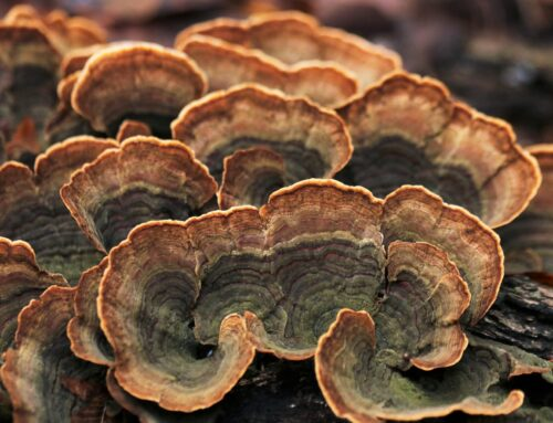 The Wood Wide Web: Underground Fungi-Plant Communication Network